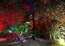 image shade-trees-garden-07-jpg