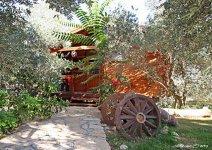 image shade-trees-garden-08-jpg