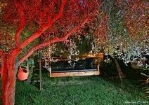 image shade-trees-garden-10-jpg