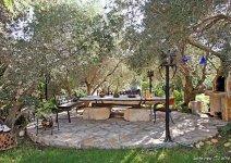 image shade-trees-garden-11-jpg