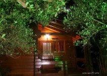 image shade-trees-zhoar-09-jpg