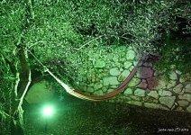image shade-trees-zhoar-10-jpg